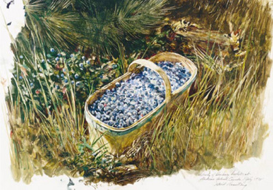 Blueberry Pine- Signed By Embossed Signature – PaperLithograph  – Limited Edition  – 950S/N  –  7x10