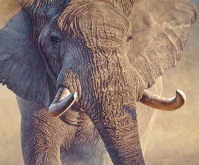 Big Ivory- Signed By The Artist								 – Canvas Giclee – Limited Edition – 175 S/N – 33 x 40