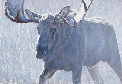 Bull Of The Woods- Signed By The Artist								 – Canvas Giclee – Limited Edition – 175 S/N – 28 x 40