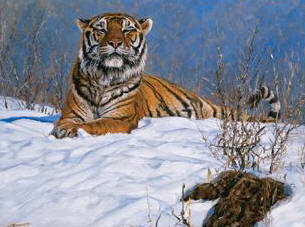 Siberian Tiger- Signed By The Artist								 – Canvas Giclee – Limited Edition – 350 S/N – 11 x 14