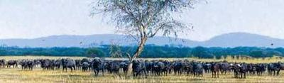 United We Stand- Signed By The Artist – CanvasGiclee – Limited Edition – 175S/N – 15x56