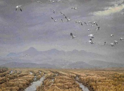 Across The Sky – Snow Geese- Signed By The Artist								 – Paper Lithograph – Limited Edition – 950 S/N – 19 1/2 x 25 7/8