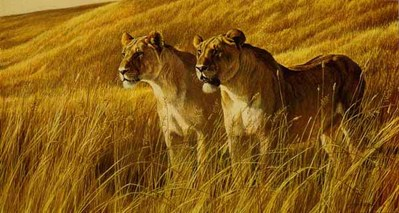 African Amber – Lioness Pair- Signed By The Artist								 – Paper Lithograph – Limited Edition – 950 S/N – 20 x 33 1/2 –