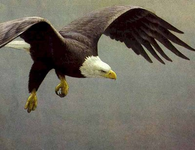 Approach – Bald Eagle- Signed By The Artist – PaperLithograph – Limited Edition – 290S/N – 28 3/4x38
