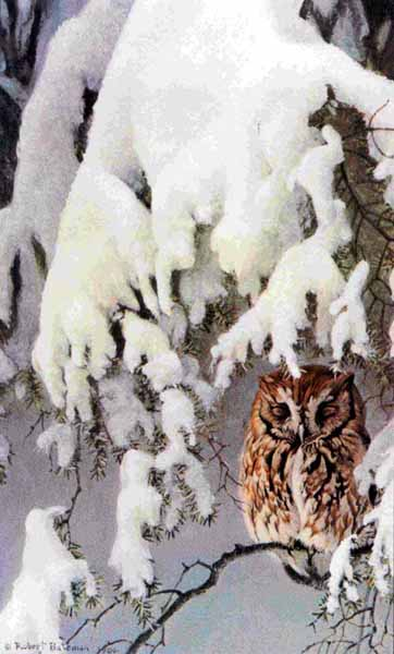 Asleep In The Hemlock – Screech Owl- Signed By The Artist – PaperLithograph – Limited Edition – 950S/N – 20 1/2x12 1/2