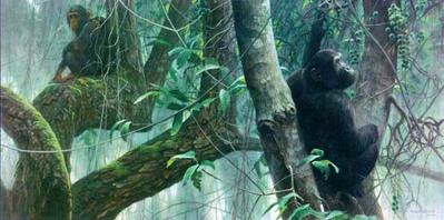 At Mahale – Chimpanzees- Signed By The Artist – PaperLithograph – Limited Edition – 950S/N – 17 1/2x35