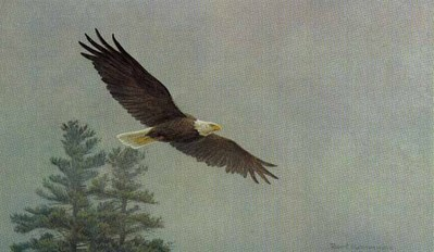 Bald Eagle Flying- Signed By The Artist								 – Paper Lithograph – Limited Edition – 950 S/N – 9 1/4 x 15 3/8