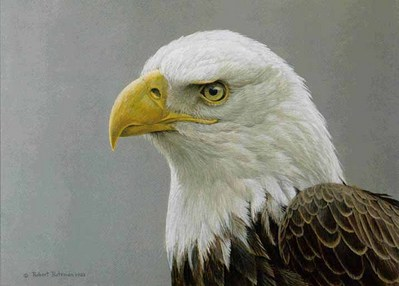 Bald Eagle Portrait- Signed By The Artist								 – Paper Lithograph – Limited Edition – 950 S/N – 11 3/4 x 16 3/4