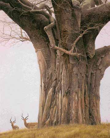 Baobab Tree And Impala- Signed By The Artist								 – Paper Lithograph – Limited Edition – 56 A/P – 25 3/4 x 20
