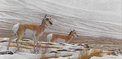 Big Country – Pronghorn Antelope- Signed By The Artist								 – Paper Lithograph – Limited Edition – 950 S/N – 13 1/2 x 25