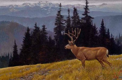 Black-Tailed Deer In The Olympics- Signed By The Artist								 – Paper Lithograph – Limited Edition – 950 S/N – 20 x 29 3/4