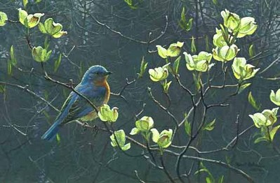 Bluebird And Blossoms- Signed By The Artist – PaperLithograph – Limited Edition – 4500S/N – 11 3/8x17