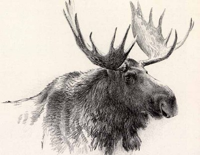 Bull Moose – Lithograph- Signed By The Artist								 – Paper Lithograph – Limited Edition – 252 S/N – 13 x 15 –