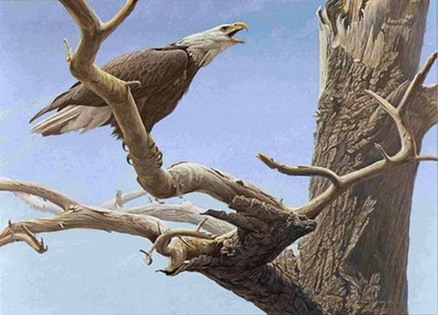 Call Of The Wild – Bald Eagle- Signed By The Artist – PaperLithograph – Limited Edition – 950S/N – 20x26 5/8 –
