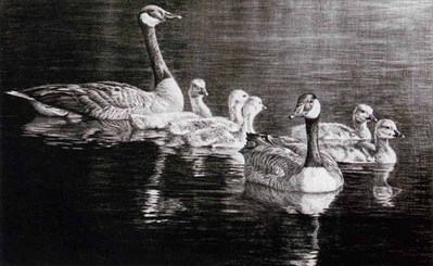 Canada Geese Family- Signed By The Artist – PaperLithograph – Limited Edition – 260S/N – 12 1/2x18 1/2