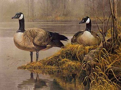 Canada Geese – Nesting- Signed By The Artist – PaperLithograph – Limited Edition – 56A/P – 24x31