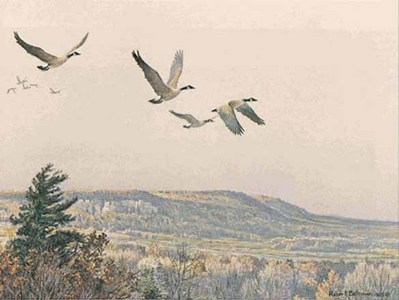 Canada Geese Over The Escarpment- Signed By The Artist – PaperLithograph – Limited Edition – 950S/N – 8 1/4x11 5/8