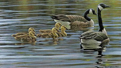Canada Geese With Young- Signed By The Artist – PaperLithograph – Limited Edition – 950S/N – 11x18 1/2
