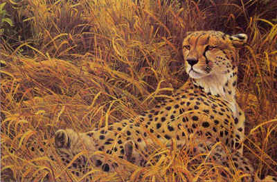 Cheetah With Cubs- Signed By The Artist								 – Paper Lithograph – Limited Edition – 950 S/N – 15 x 22 1/2