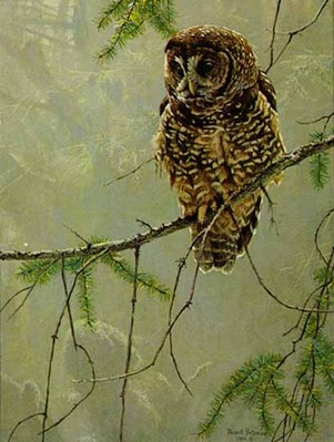 Continuing Generations – Spotted Owls – Set Of Two- Signed By The Artist – PaperLithograph – Limited Edition – 950S/N – 20x15
