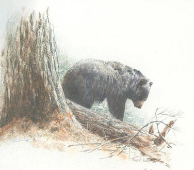 Cook Forest – Black Bear- Signed By The Artist – PaperLithograph – Limited Edition – S/N – 6x8 –