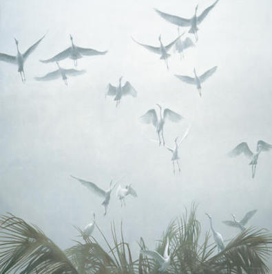 Egrets Of The Sacred Grove- Signed By The Artist – CanvasGiclee – Limited Edition – 99S/N – 44x44