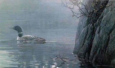 Evening Call – Common Loon- Signed By The Artist – PaperLithograph – Limited Edition – 950S/N – 11 3/8x19