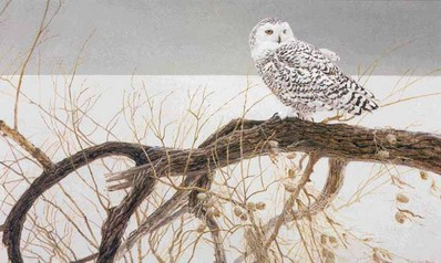 Fallen Willow – Snowy Owl- Signed By The Artist								 – Paper Lithograph – Limited Edition – 20 P/P – 20 1/2 x 33 1/2