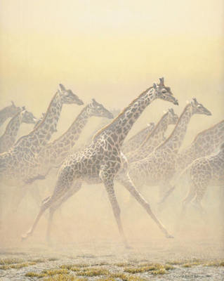 Galloping Herd – Giraffes- Signed By The Artist								 – Paper Lithograph – Limited Edition – 950 S/N – 25 1/4 x 20 –