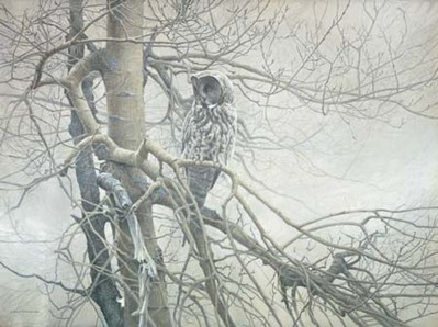 Ghost Of The North – Great Gray Owl- Signed By The Artist – PaperLithograph – Limited Edition – 950S/N – 20x27