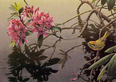 Golden-Crowned Kinglet And Rhododendron- Signed By The Artist – PaperLithograph – Limited Edition – 950S/N – 12x15 1/2 –