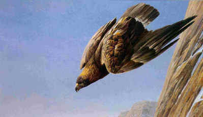 Golden Eagle- Signed By The Artist – PaperLithograph – Limited Edition – 950S/N – 20x32 3/4 –