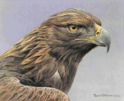 Golden Eagle Portrait- Signed By The Artist – PaperLithograph – Limited Edition – 950S/N – 7 1/4x8 3/4