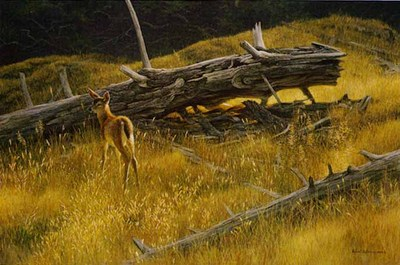 Golden Light – Black-Tailed Fawn- Signed By The Artist								 – Paper Lithograph – Limited Edition – 950 S/N – 17 3/4 x 27