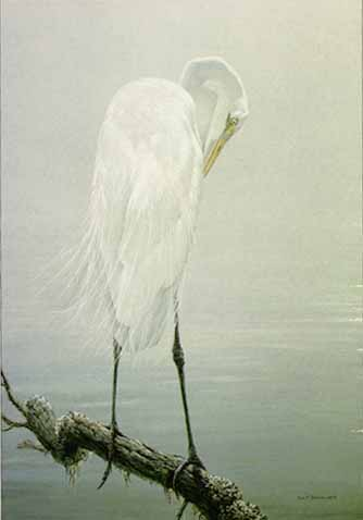 Great Egret Preening- Signed By The Artist – PaperLithograph – Limited Edition – 950S/N – 30 1/2x19 1/2