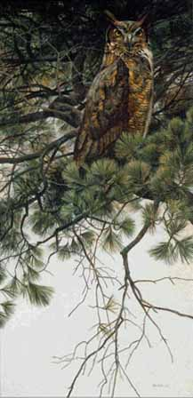 Great Horned Owl In White Pine- Signed By The Artist								 – Paper Lithograph – Limited Edition – 20 P/P – 30 1/2 x 15 7/8