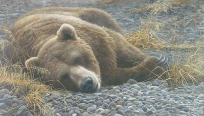 Grizzly At Rest- Signed By The Artist								 – Canvas Giclee – Limited Edition – A/P – 24 x 42
