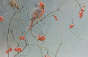 Highbush Cranberries – Cardinal- Signed By The Artist								 – Paper Lithograph – Limited Edition – 950 S/N – 9 x 13 1/2