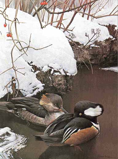 Hooded Mergansers In Winter- Signed By The Artist – PaperLithograph – Limited Edition – 950S/N – 22x16 1/2