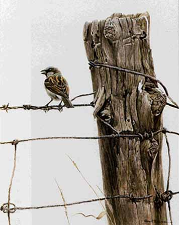 House Sparrow- Signed By The Artist								 – Paper Lithograph – Limited Edition – 950 S/N – 14 1/2 x 10 1/2 –