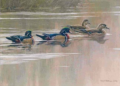 Hurricane Lake – Wood Ducks- Signed By The Artist								 – Paper Lithograph – Limited Edition – 8855 S/N – 6 1/2 x 9