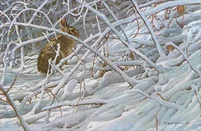 In The Briar Patch – Cottontail- Signed By The Artist – PaperLithograph – Limited Edition – 950S/N – 12x17 1/2
