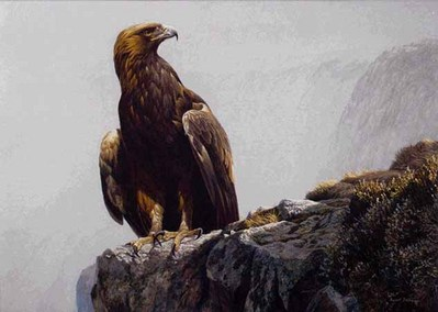 In The Highlands – Golden Eagle- Signed By The Artist – PaperLithograph – Limited Edition – 950S/N – 20x28