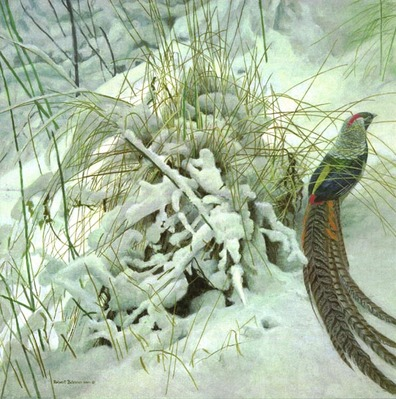 Lady Amherst Pheasant- Signed By The Artist								 – Paper Lithograph – Limited Edition – 76 A/P – 23 x 23
