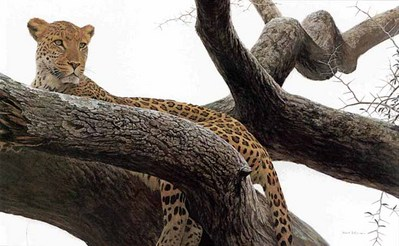 Leopard At Seronera- Signed By The Artist								 – Paper Lithograph – Limited Edition – 56 A/P – 12 7/8 x 19 1/2