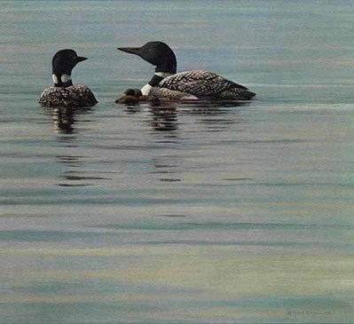 Loon Family- Signed By The Artist								 – Paper Lithograph – Limited Edition – 20 P/P – 16 1/2 x 18 1/4