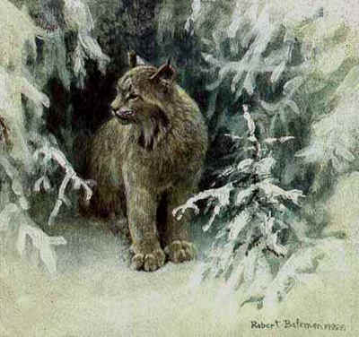 Lynx In Snow- Signed By The Artist								 – Paper Lithograph – Limited Edition – 76 A/P – 8 x 8 1/2