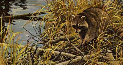 Mischief On The Prowl – Raccoon- Signed By The Artist – PaperLithograph – Limited Edition – 950S/N – 9 1/2x18 1/2