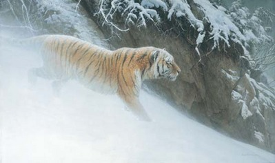 Momentum – Siberian Tiger- Signed By The Artist								 – Paper Lithograph – Limited Edition – 1500 S/N – 19 1/2 x 32 1/2