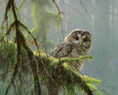 Mossy Branches – Spotted Owl – Prestige Edition- Signed By The Artist – PaperLithograph – Limited Edition – 450S/N – 15x18 5/8